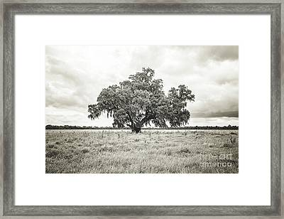 Enchanted  Oak - Sepia Toned Framed Print
