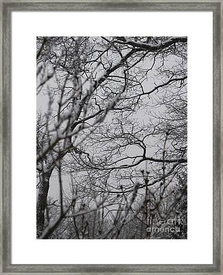 Enchanted Framed Print by Roxy Riou
