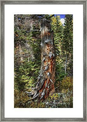 Enchanted Tree Framed Print