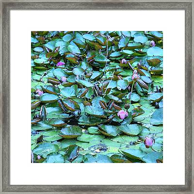 Painted Water Lilies Framed Print by Theresa Tahara
