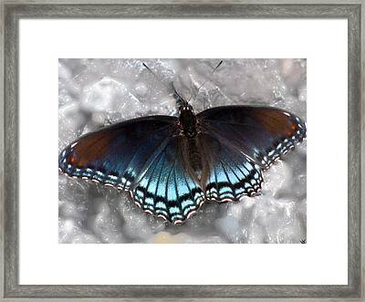 Enchanted  Wings Framed Print by Debra     Vatalaro