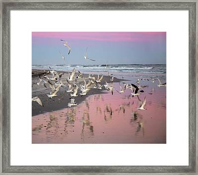 Enchanting Evening Framed Print