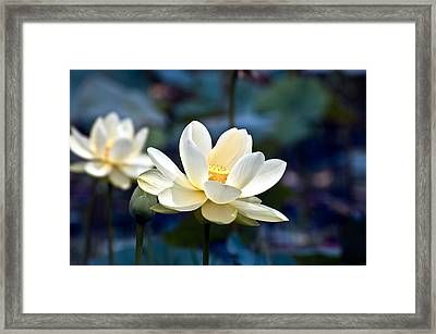 Enchanting Lotus Framed Print by Rich Leighton