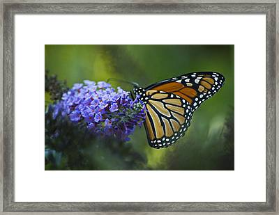 Framed Print featuring the photograph Enchanting Monarch by Elsa Marie Santoro