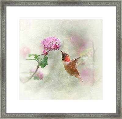 Enchantment In The Garden Framed Print by Angie Vogel