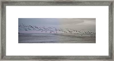 Encore Framed Print by Betsy Knapp