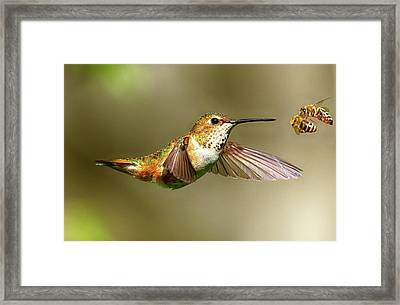 Encounter Framed Print by Sheldon Bilsker