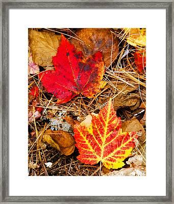 End Of Fall Framed Print by Bob Bailey