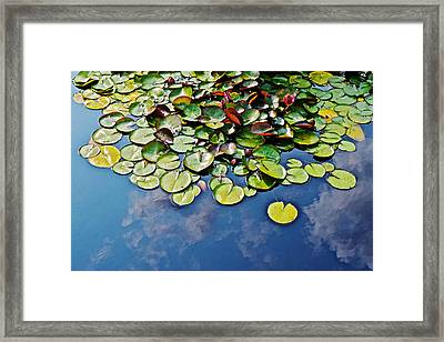 End Of July Water Lilies In The Clouds Framed Print by Janis Nussbaum Senungetuk
