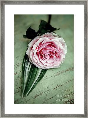 End Of The Day Rose Framed Print