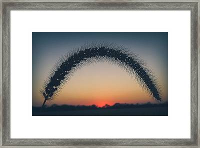 Framed Print featuring the photograph End Of The Day by Viviana  Nadowski