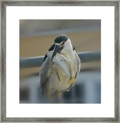 End Of The Line Framed Print by Fraida Gutovich