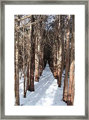 End Of The Trail Framed Print by Jeff Porter