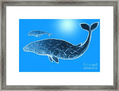 Endangered Gray Whales Framed Print by Nick Gustafson