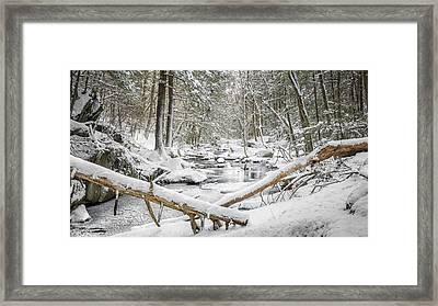 Enders State Forest Framed Print by Bill Wakeley