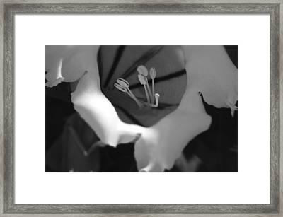 Endless Search Framed Print by Tara Miller