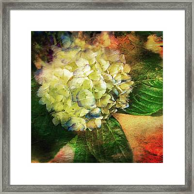 Endless Summer Framed Print by Colleen Taylor