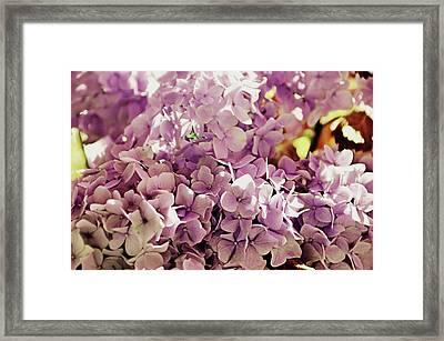 Endless Summer Color Framed Print by JAMART Photography