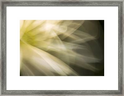 Energetic Coneflower  Framed Print