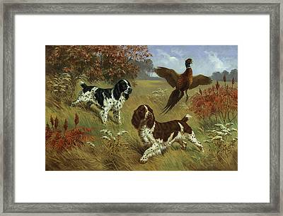 Energetic English Springer Spaniels Framed Print by Walter A. Weber
