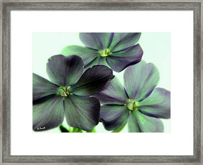 Energize Framed Print by Ed Smith