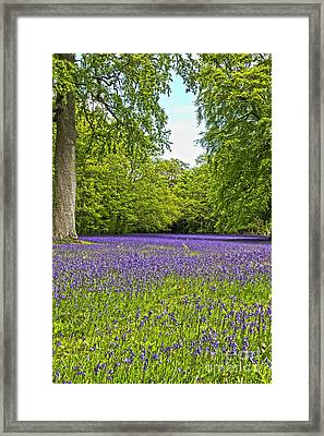 English Bluebells Framed Print by Terri Waters