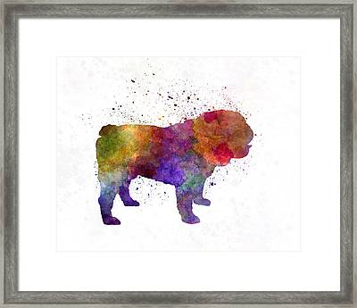 English Bulldog In Watercolor Framed Print by Pablo Romero