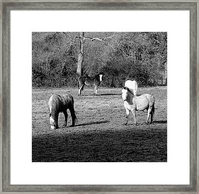 English Horses Framed Print