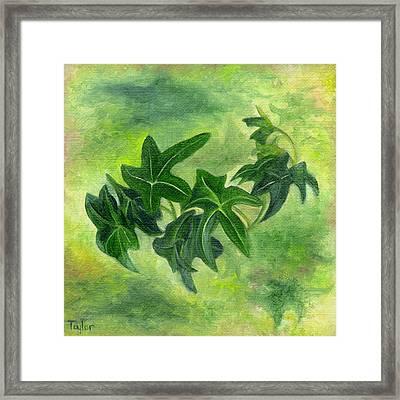 English Ivy Framed Print
