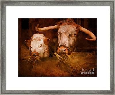 English Longhorn Cattle Framed Print by ShabbyChic fine art Photography