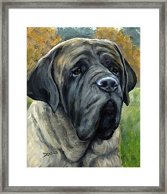 English Mastiff Black Face Framed Print by Dottie Dracos