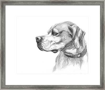 English Pointer Sketch Framed Print by Svetlana Ledneva-Schukina