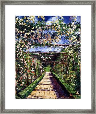 English Rose Trellis Framed Print by David Lloyd Glover