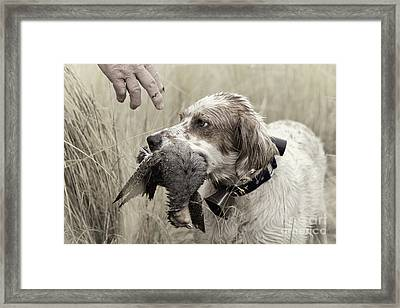 English Setter And Hungarian Partridge - D003092a Framed Print