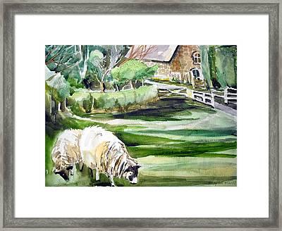 English Sheep Framed Print by Mindy Newman