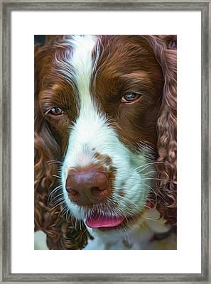 English Springer Spaniel 2 - Paint Framed Print by Steve Harrington