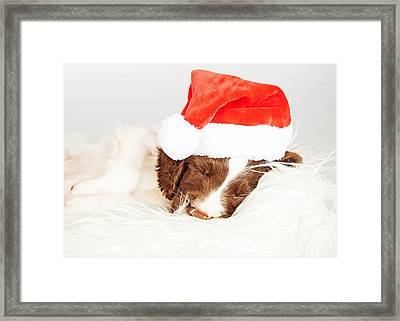 English Springer Spaniel Puppy Wearing Santa Hat While Sleeping Framed Print