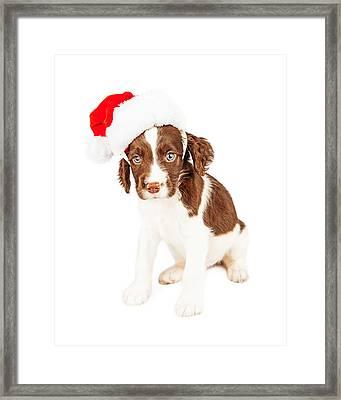 English Springer Spaniel Santa Puppy Framed Print by Susan Schmitz