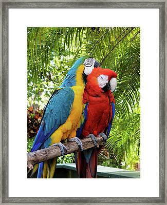 Enjoy The Moment Framed Print by Jill Nightingale