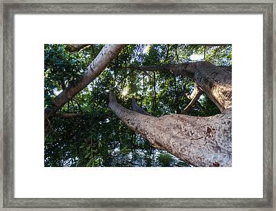 Enjoying Nature Framed Print by Andrea Mazzocchetti
