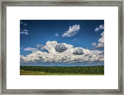 Enjoying Some Cotton Candy On The 4th 004 Framed Print