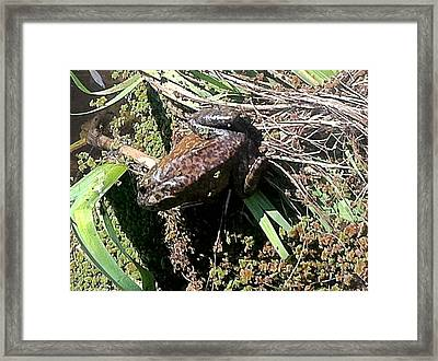 Enjoying Sunshine Framed Print