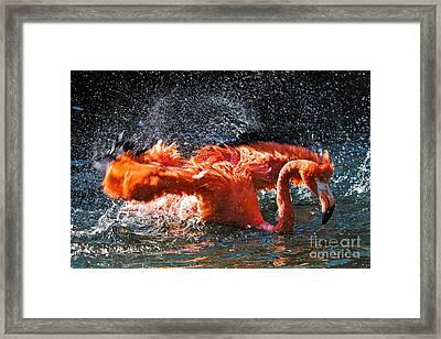Enjoying The Bath Framed Print by Joerg Lingnau