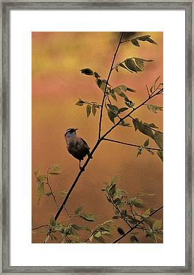 Enjoying The Breeze Framed Print