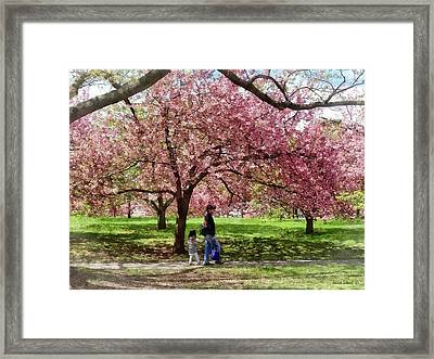Enjoying The Cherry Trees Framed Print by Susan Savad