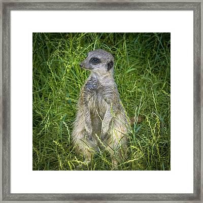 Enjoying The Grass Framed Print