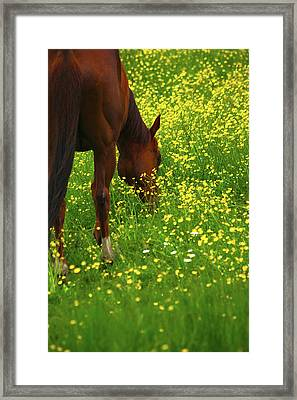 Framed Print featuring the photograph Enjoying The Wildflowers by Karol Livote