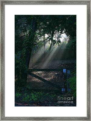 Framed Print featuring the photograph Enlighten by Lori Mellen-Pagliaro