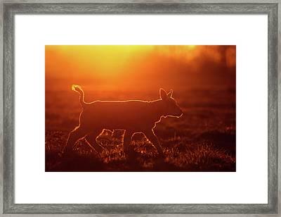 Enlightened Lamb Framed Print