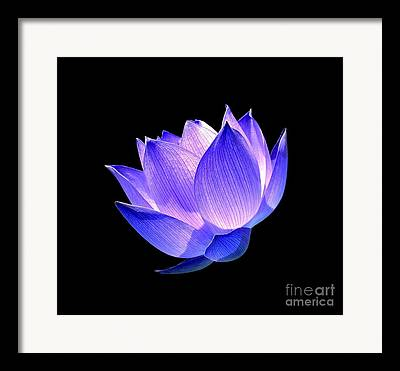 Lotus Flower Framed Prints